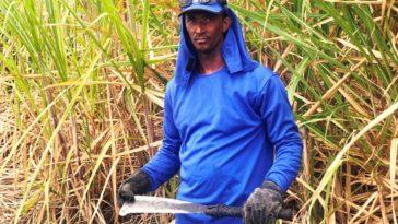 Cultura da cana-de-açúcar é destaque na geração de empregos em Juazeiro da Bahia. Foto: Divulgação