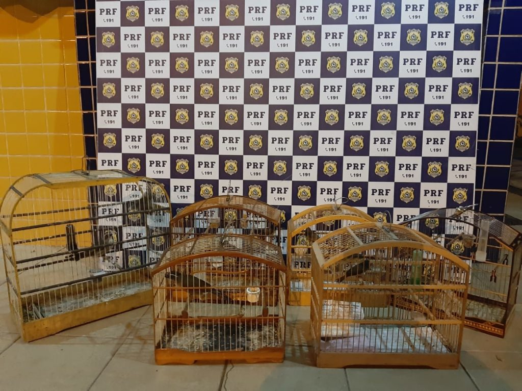 PRF flagra crime ambiental e resgata aves silvestres transportadas em carro de passeio na BR 116 em Feira de Santana. Foto: Divulgação/PRF-BA