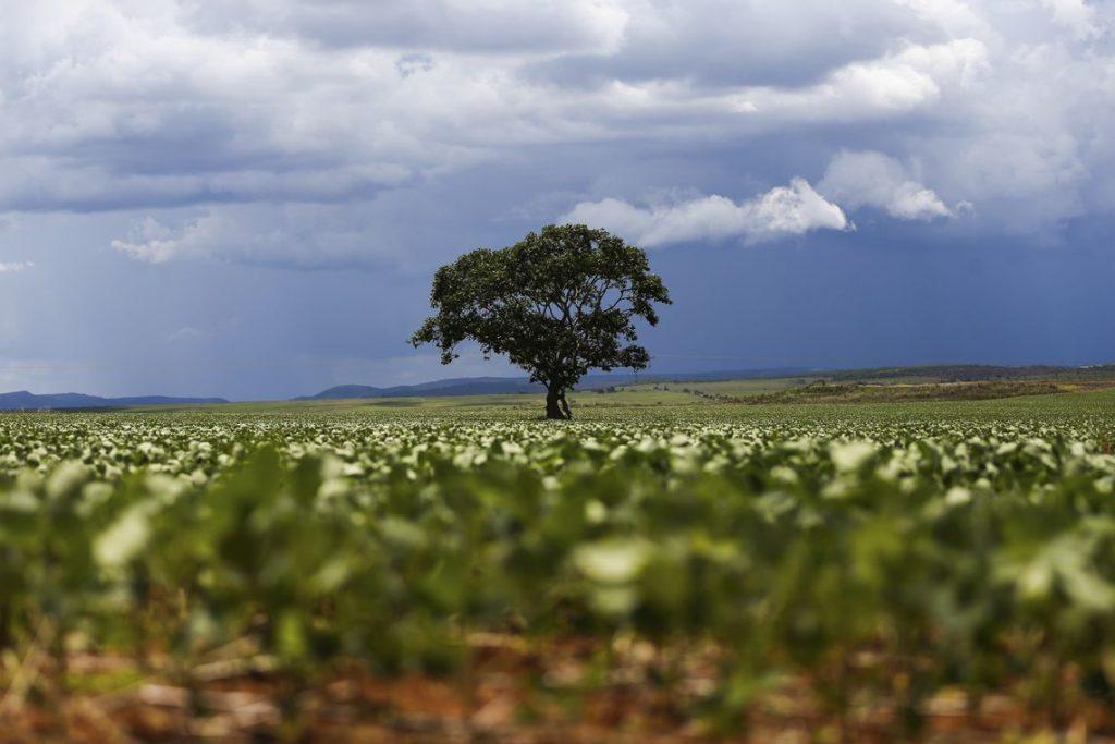 Alto Paraíso (GO) - Plantação de soja em área do  município de Alto Paraíso. Foto: Marcelo Camargo/Agência Brasil