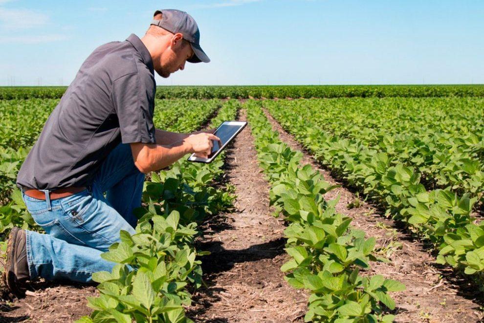 Oeste baiano pode exportar tecnologia agrícola para outras regiões brasileiras. Foto: Divulgação