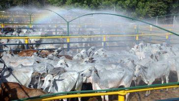 Em entrevista à Pública, trabalhadores relatam que o ritmo de produção dos frigoríficos não diminuiu durante a pandemia (Foto: Bruno Cecim/Ag.Pará)
