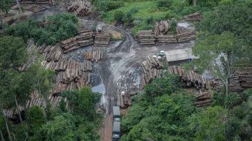 Ex-presidente do Ibama questiona: governo está diminuindo multas em áreas estratégicas para fiscalização, onde há altos índices de desmatamento