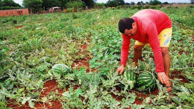 Além de incentivar o pequeno agricultor a Abapa fomenta a sustentabilidade (Foto: Divulgação/Abapa)