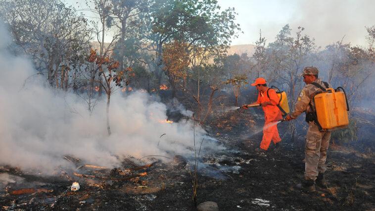 Levantamento da Pública mostra que 85 municípios brasileiros elegeram representantes com infrações ambientais nas eleições deste ano (Foto: Fernando Alves/Governo de Tocantins)