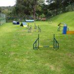 Área para a prática de agility com cerca de 400m² montada dentro do Residencial Aldeia do Vale (Foto: Dayse Luan)