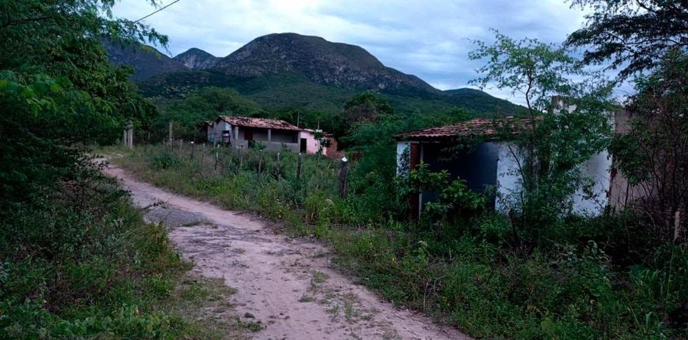 O mato que cobre as antigas casas é o retrato da atual Canavieiras (Foto: Nádia Conceição/Agência Pública)